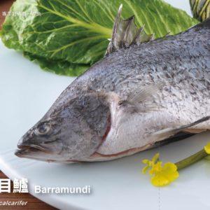 2019ปลากระพงDM4_